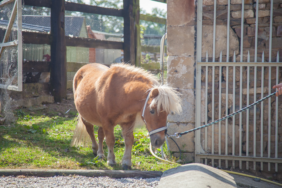 Discover the horses at the French Farmhouse B&B