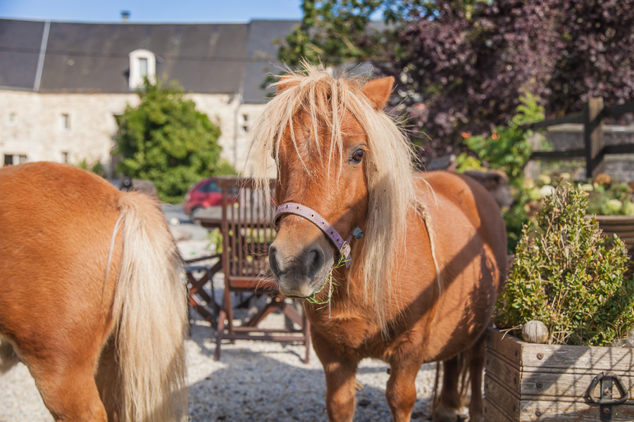 Discover the horses at the French Farmhouse B&B Luxury holiday accommodation near Caen, Normandy.